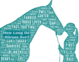 The Ultimate Guide for Horse Lovers