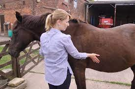 Horses respiration rate